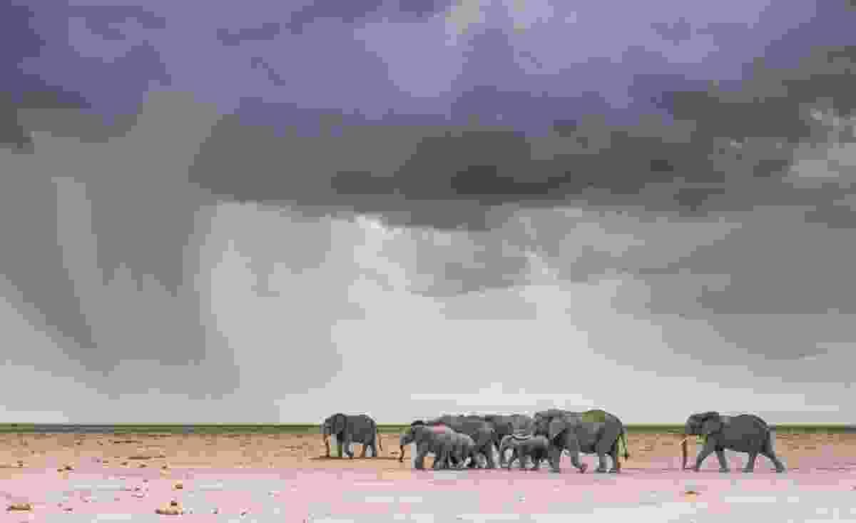 (Shem Compion/Remembering Elephants )