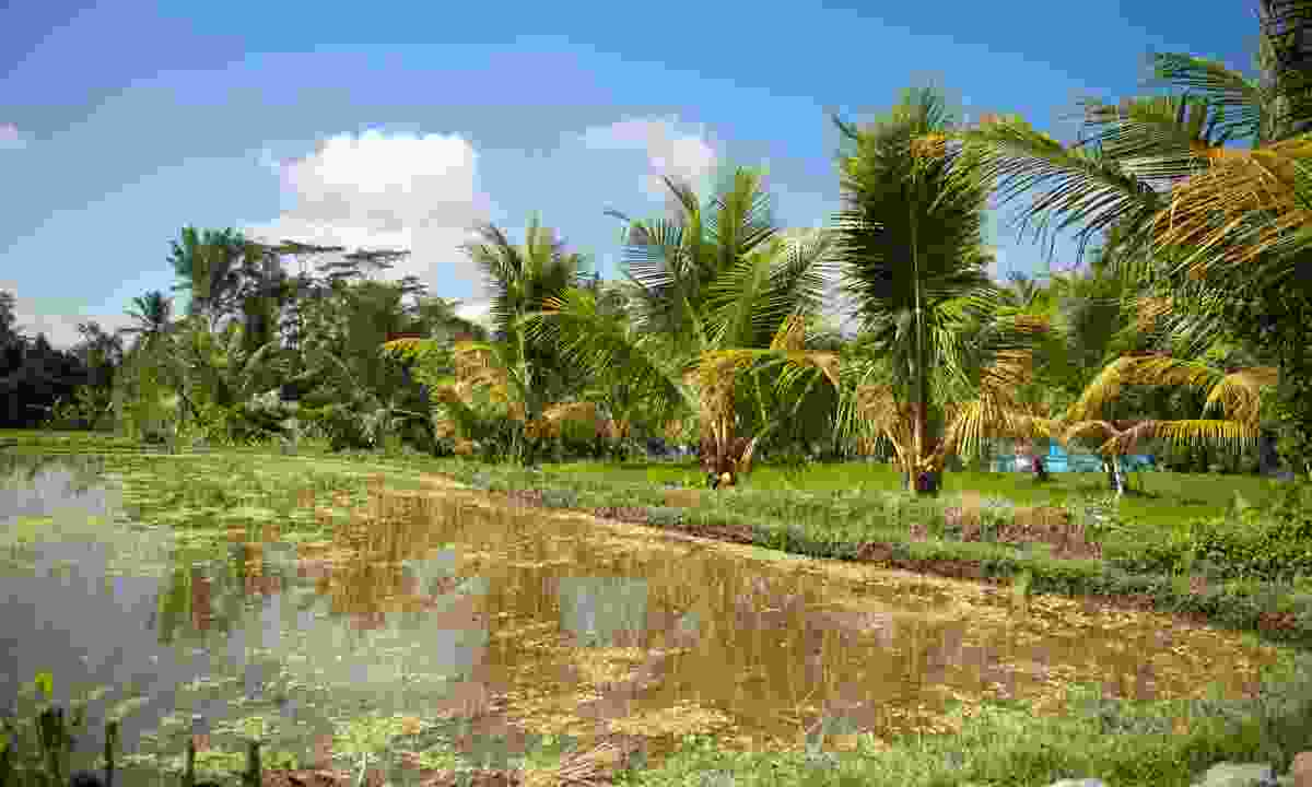 Nusa Tenggara (Mark Stratton)
