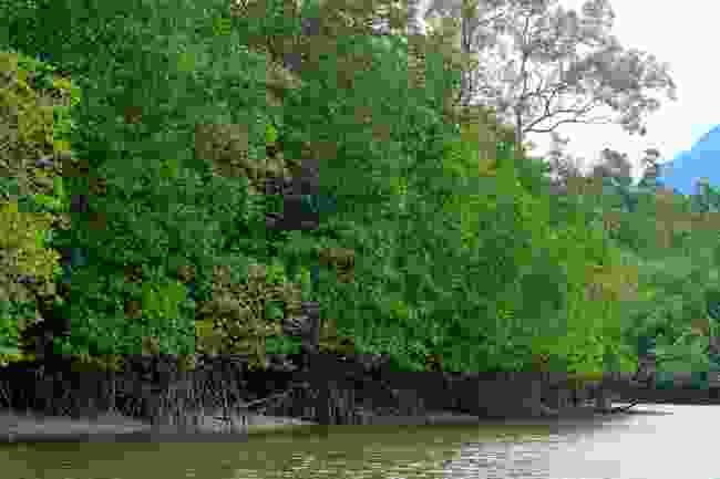 Explore Kuching Wetlands by boat (Shutterstock)