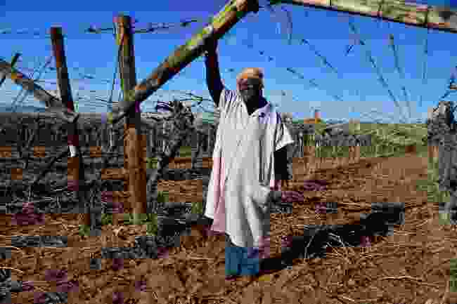 A farm worker at the Die Mas vineyard, Kakamas (South African Tourism)
