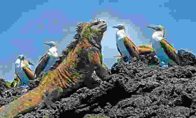 Cruise the Galápagos Islands, Ecuador (Dreamstime)