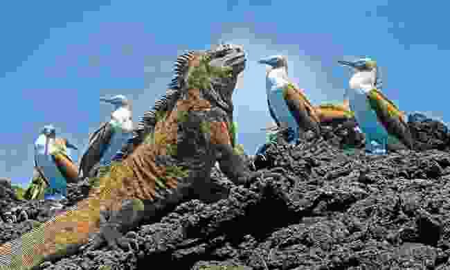 Cruise the Galápagos Islands, Ecuador (Dreamstime)