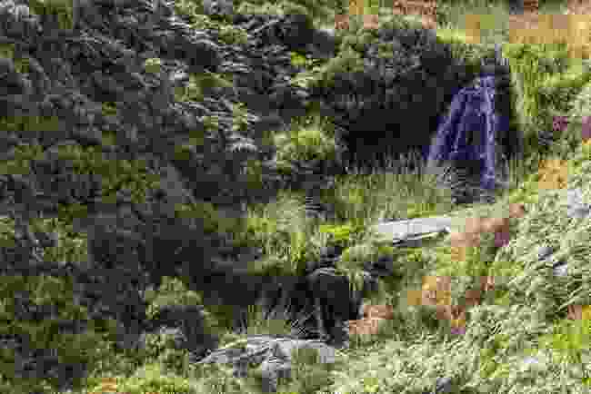 Bronte Falls, Haworth, Yorkshire (Shutterstock)