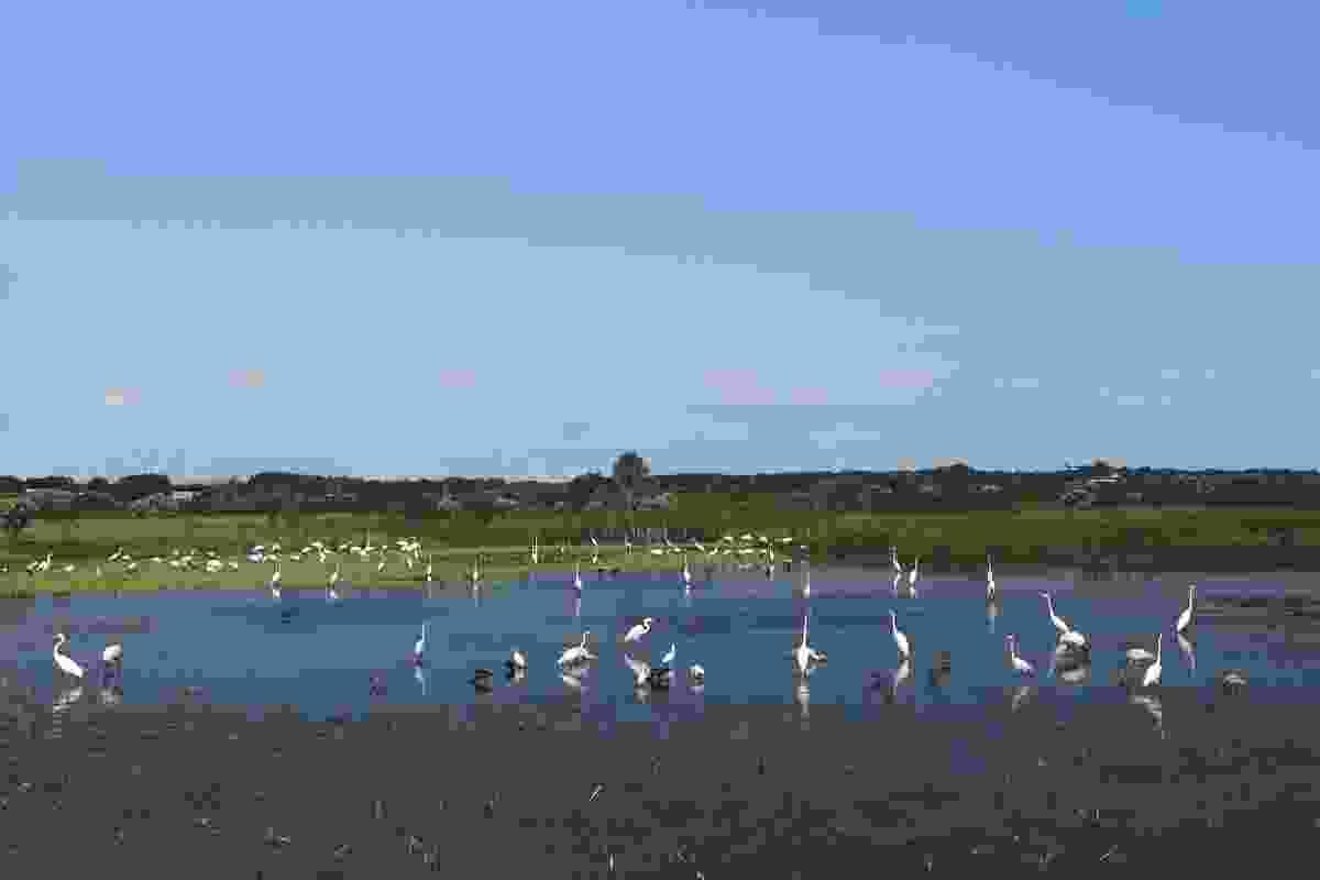 Celery Fields wetlands, near Sarasota, Florida (Shutterstock)