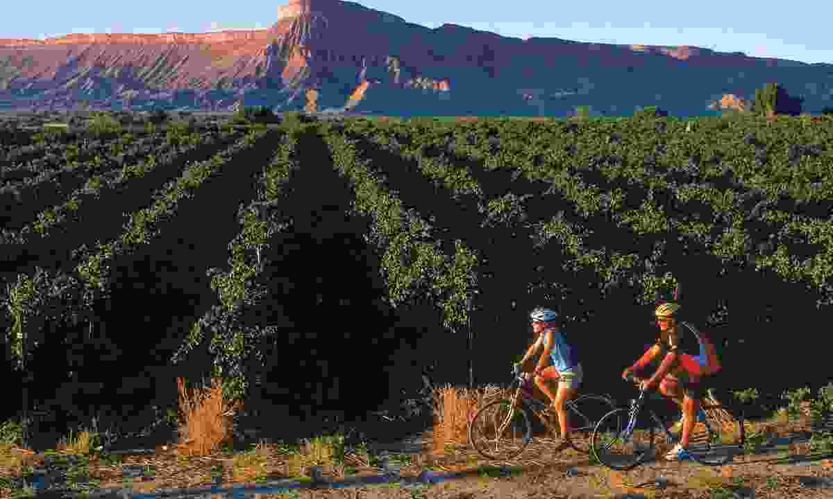 Couple cycling through Colorado vineyards (Colorado.com)
