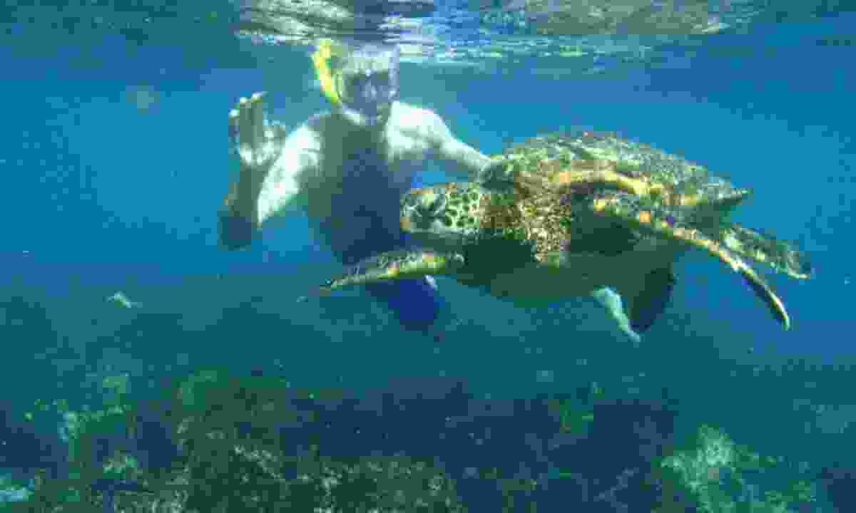 Snorkelling with a turtle in the Galápagos (Dreamstime)