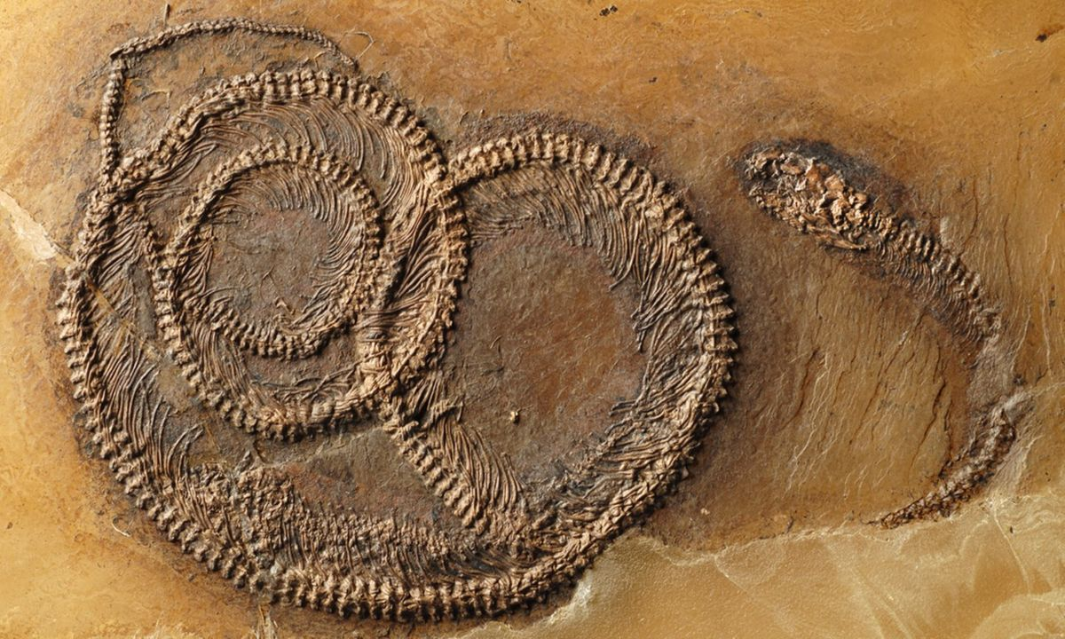 Fossil food chain (senckenberg.de)