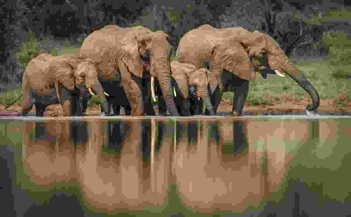(Richard Peters/Remembering Elephants)