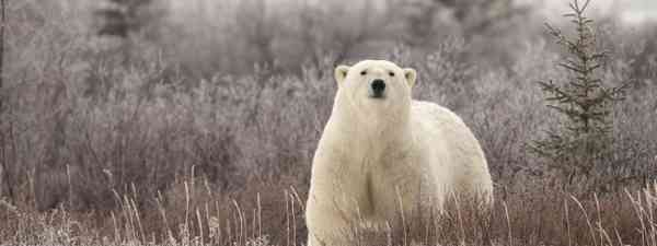 Polar bear on Hudson Bay, Canada (Dreamstime)
