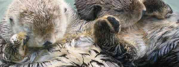 Sea otters (Visit California)