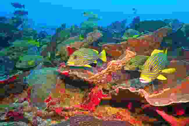 Enjoy the colourful coral of the Apo Reef (Shutterstock)