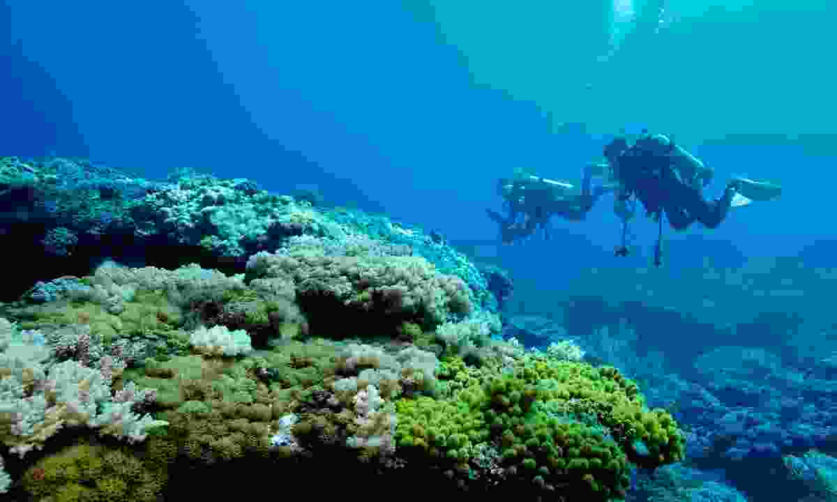 Scuba diving on Green Island (Shutterstock)
