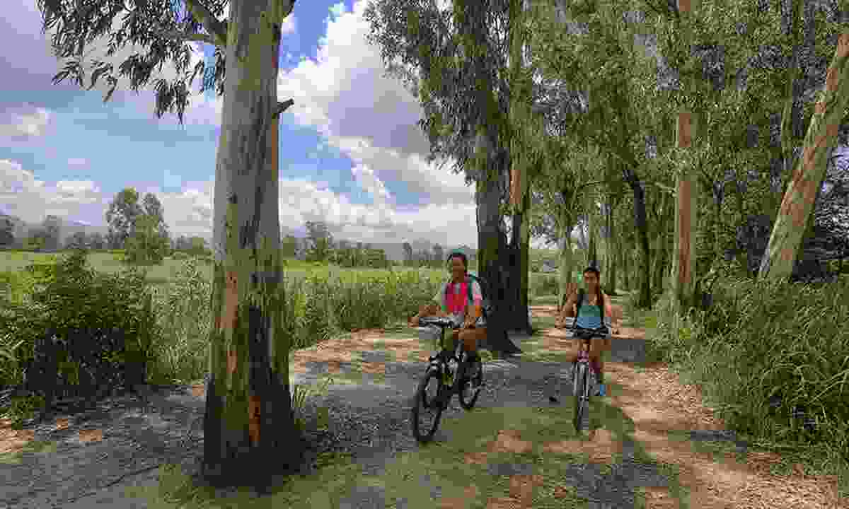 Riding past the river red gum trees of the Nam Sang Wai Trail (Hong Kong Tourism Board)