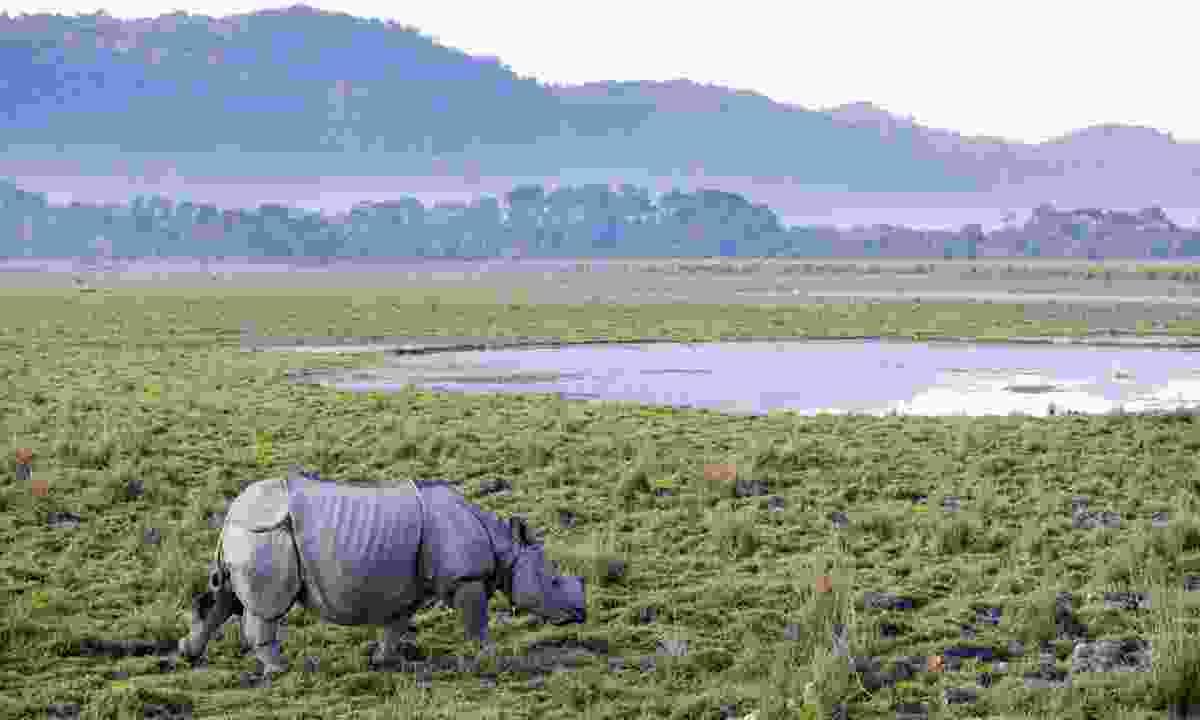 One-horned rhinoceros in Kaziranga National Park (Dreamstime)