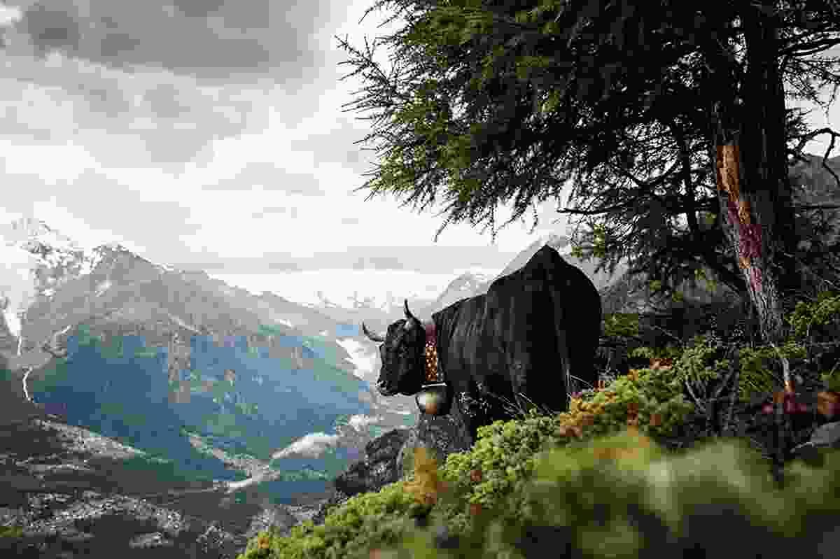 Eringer, Valais, Switzerland, © Werner Lampert GmbH, (Photo Ramona Waldner)