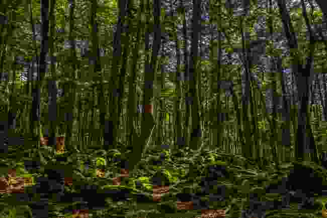 The moss-covered mystery forest of Aokigahara, Japan (Shutterstock)