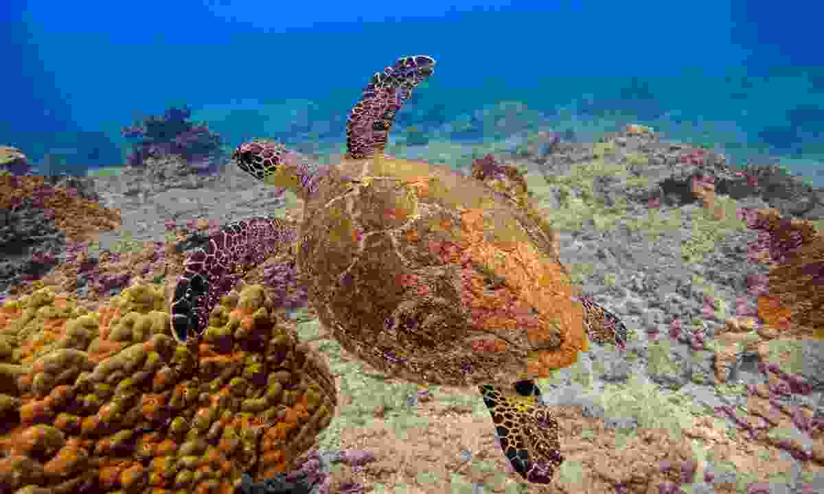 Swim with turtles in Costa Rica