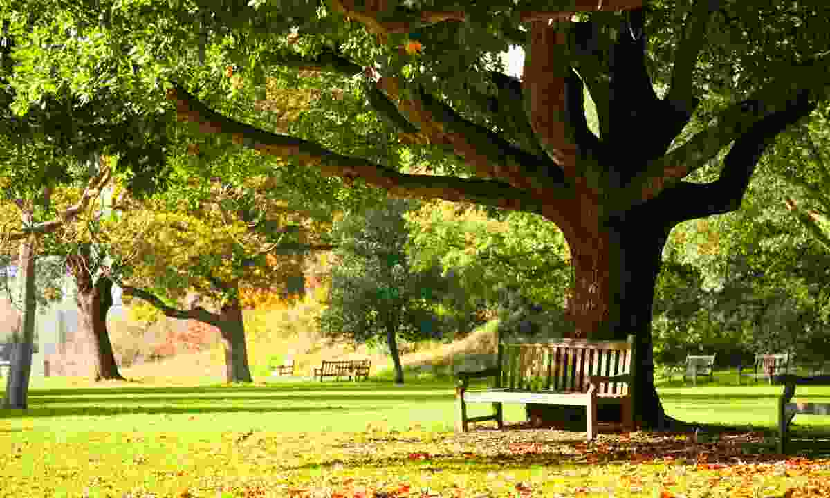 Bench under the tree in the Royal Botanic Gardens (Dreamstime)