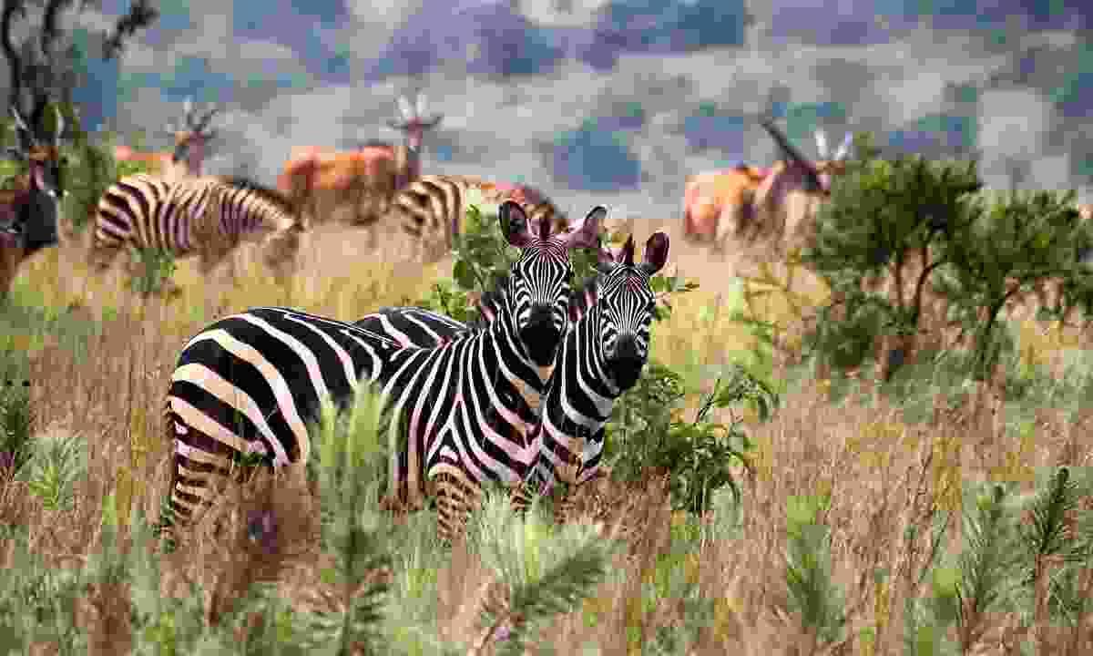Akagera National Park in Rwanda (Shutterstock)