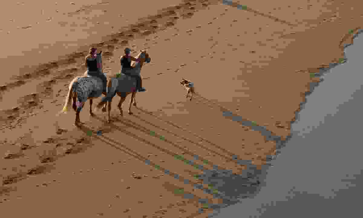 Horse riding on the beach (Emmanuel Berthier)