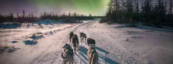 Husky sledding in Canada (Dreamstime)