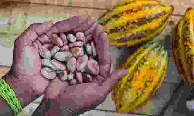 Cocoa farmer (Dreamstime)