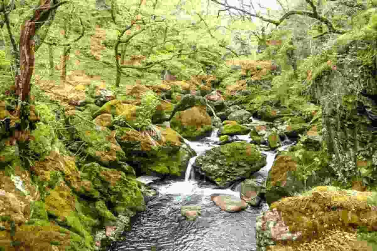 Goedol Waterfall and Woods (Christine Johnstone)