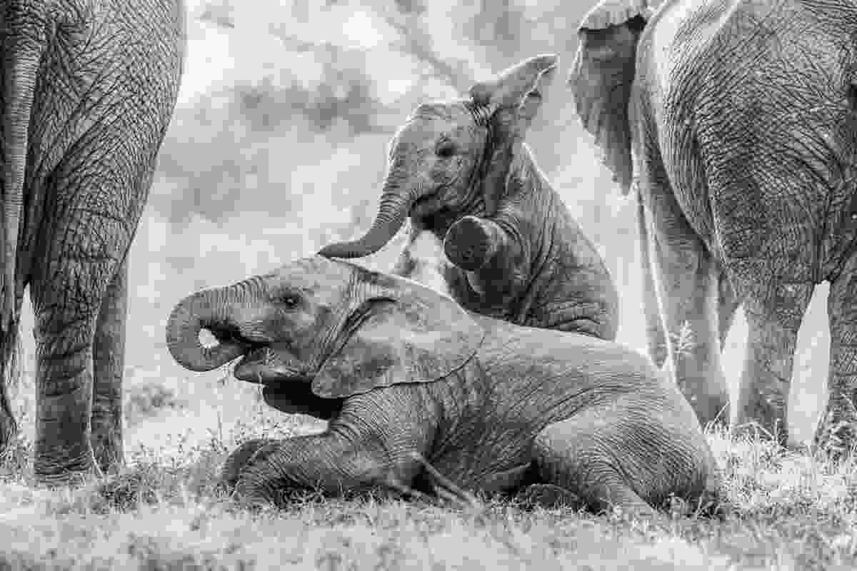 (Brendon Jennings/Remembering Elephants)