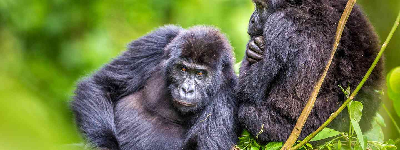 Kahuzi-Biega National Park, DRC (Marcus Westburg)