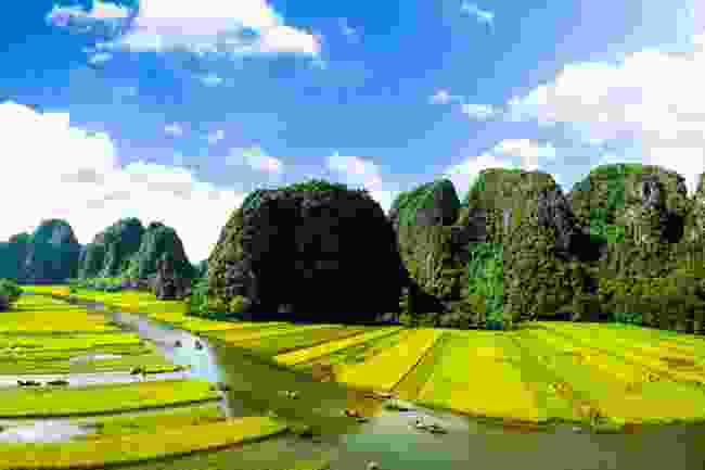 The Ngo Dong River and rice fields in Ninh Binh (Shutterstock)