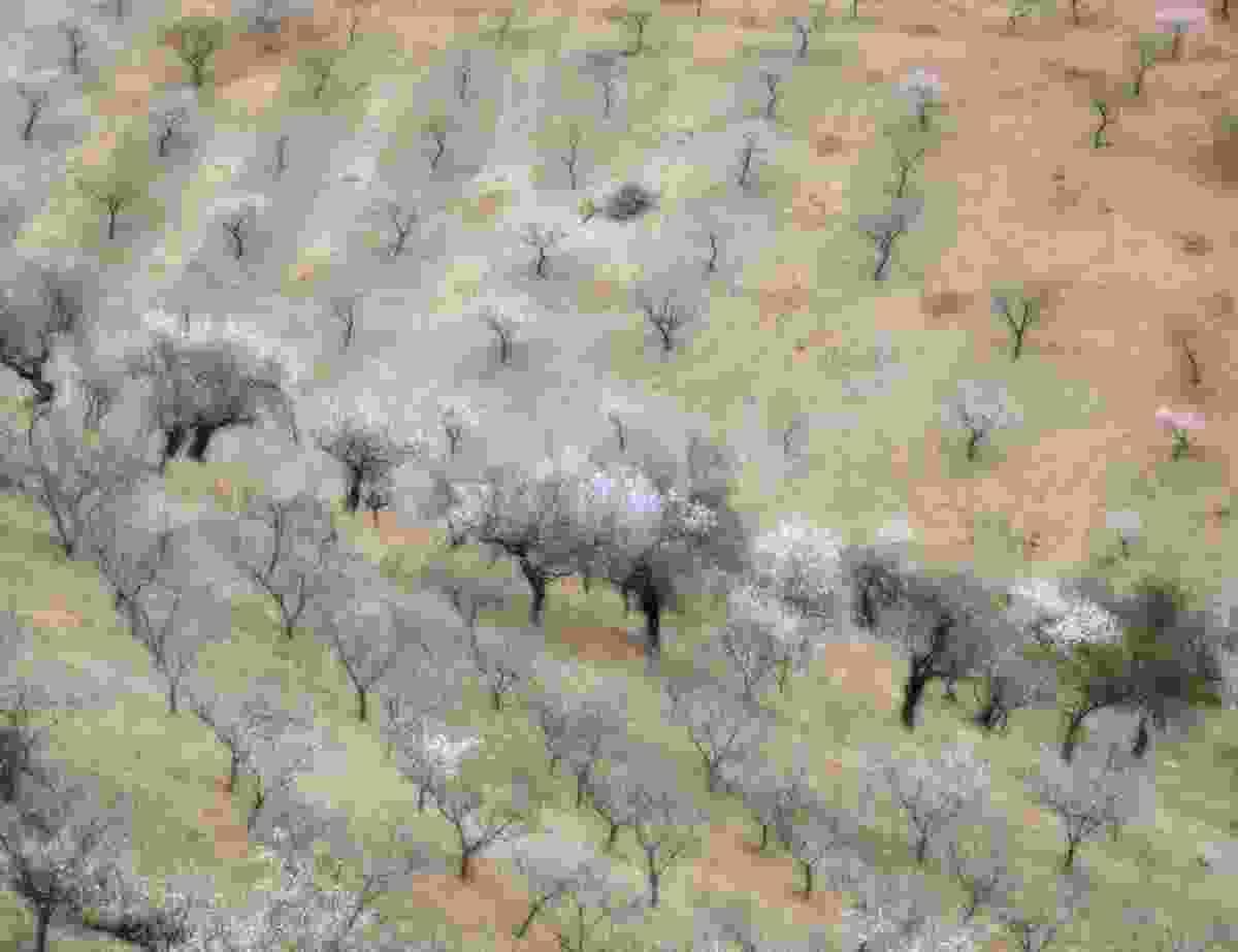 Candy floss fields (Peter Hendrie)