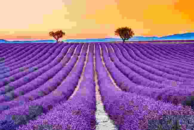 An incredible orange sky pops against Provence's famous lavender fields (Shutterstock)