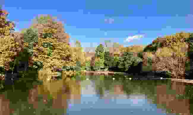 There are three baths in Hampstead heath: male only, a female only, and a mixed pond (Shutterstock)