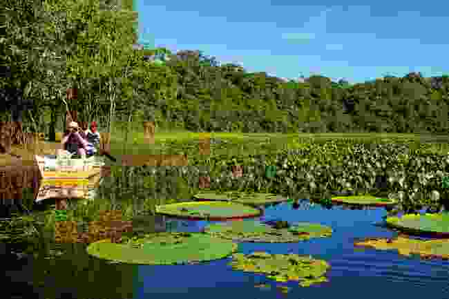 Guyana is known as the land of the giants, and with these huge lily pads, it's easy to see why (Sarah Marshall)