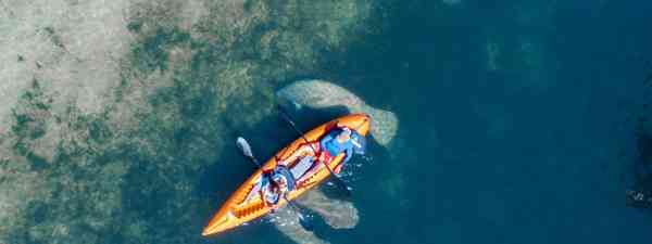 Kayaking with manatees (Shutterstock)