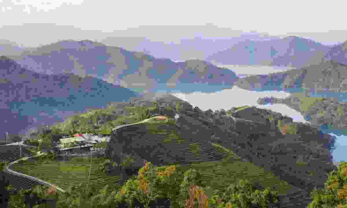 Tea gardens of Pinglin (Dreamstime)