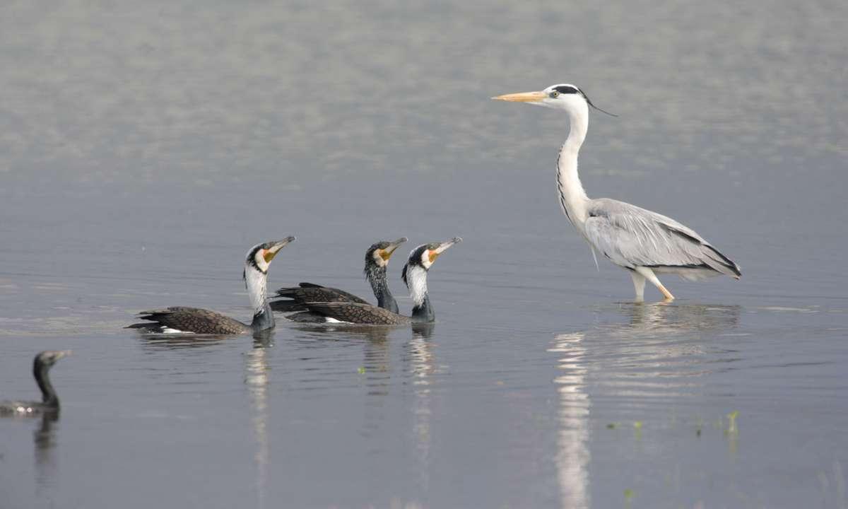 New Zealand Wildlife Bradt Wildlife Guides