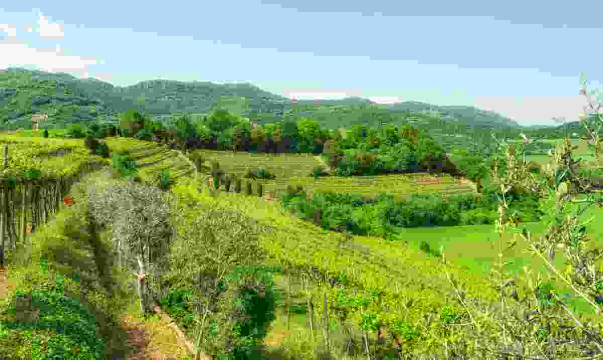 The vineyards of the Berici Hills (Shutterstock)
