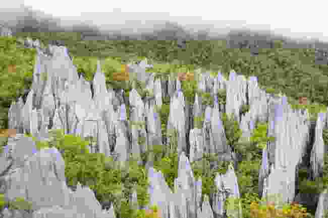 The pinnacles at Mulu National Park (Shutterstock)