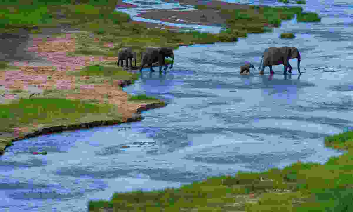 A herd of elephants cross a river in Tarangire NP (Shutterstock)