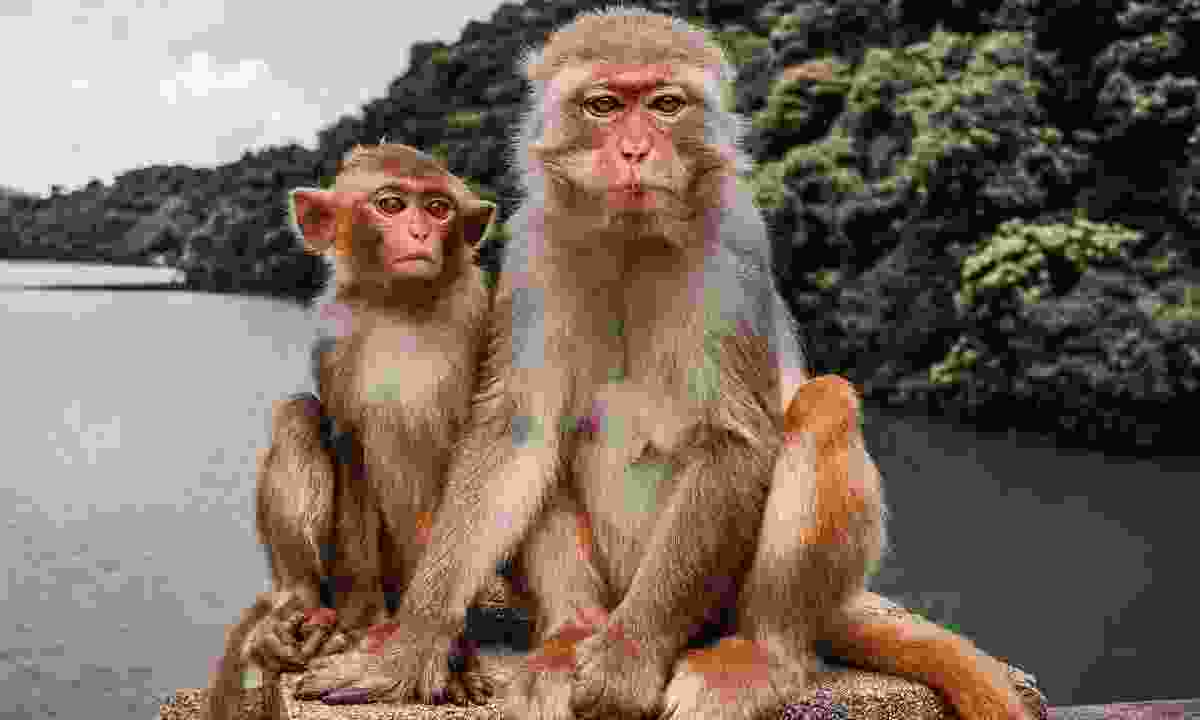 The macaques of Kam Shan Country Park (Hong Kong Tourism Board)