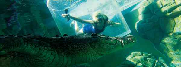 The 'Cage Of Death' at Crocosaurus Cove (Phoebe Smith)