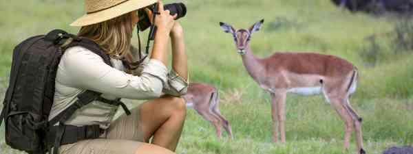Taking photos on safari (Dreamstime)