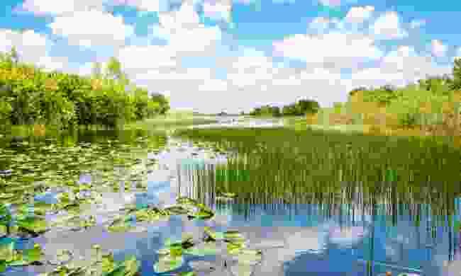 Wetlands in Everglades National Park (Dreamstime)