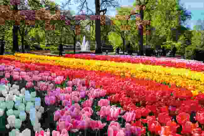 Keukenhof park is home to an estimated 7 million bulbs (Shutterstock)