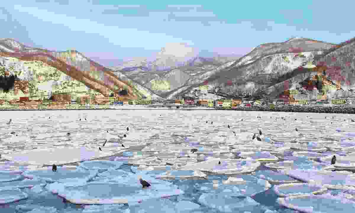 Birds resting on the frozen lake (Graeme Greene)