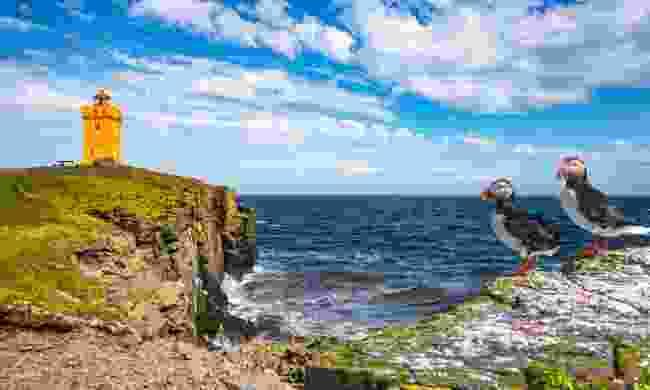Puffins on Grímsey Island (Shutterstock)
