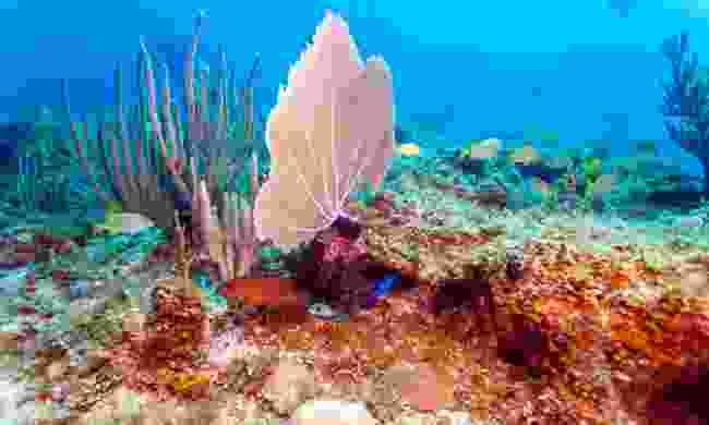 Explore Cuba's underwater life (Shutterstock)