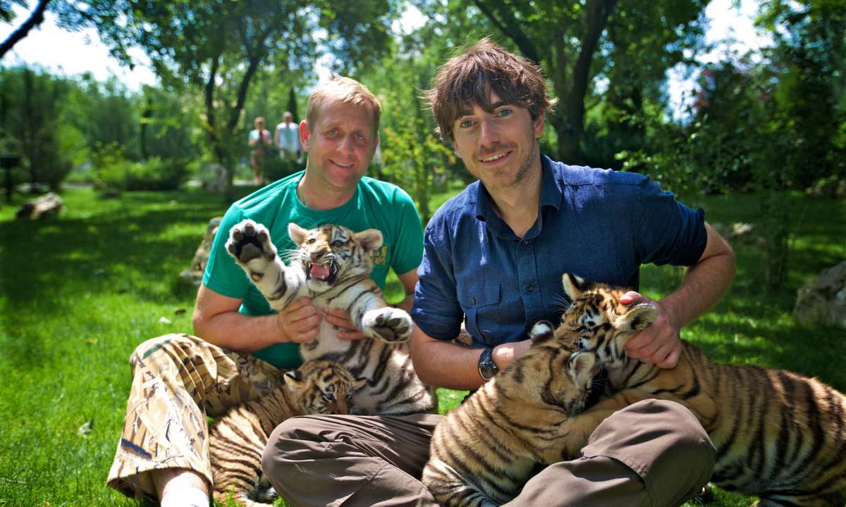 Oleg Zubkov and Simon with Siberian tigers (Jonathan Young, BBC)