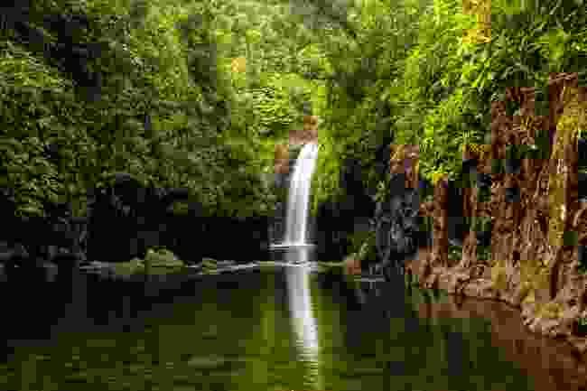 A waterfall on Taveuni Island, Fiji (Shutterstock)